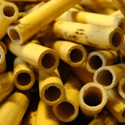 Oboe d'Amore Reed